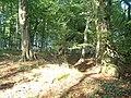 Harbke Forst Schlosspark zum Bärengrund Buchenwald - panoramio.jpg