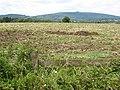 Harvested field near Birdsend - geograph.org.uk - 926819.jpg