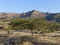Hauts plateaux-Entre Lalibela et Sekota (3).jpg