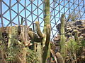 Henry Doorly Zoo desert.jpg
