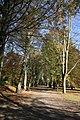 Herbst im Rombergpark - panoramio - Helfmann.jpg