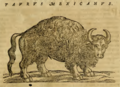 Hernandez, Taurus Mexicanus (1651).png