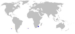 Longnose pygmy shark Heteroscymnoides marleyi
