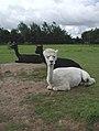 High Farm, Routh - geograph.org.uk - 488414.jpg
