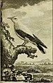 Histoire naturelle des oiseaux (1775) (14749323232).jpg