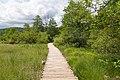 Holzweg im Nationalpark Plitvicer Seen, Kroatien (48670267221).jpg