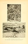Homing and related activities of birds (1915) (14750061685).jpg