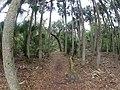 Hontoon Island State Park, FL - panoramio.jpg