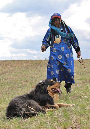 Бурят-монгольский волкодав Википедия