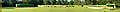 House Plant Show - Agri-Horticultural Society of India - Alipore - Kolkata 2013-11-10 4519-4525.JPG