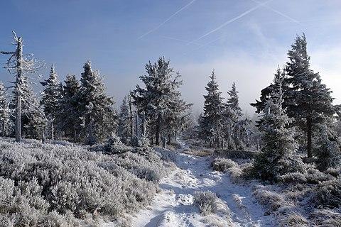 Czech Republic - Hrubý Jeseník in December 2019