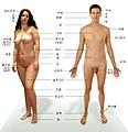 Human anatomy ko.jpg