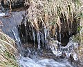 Icicles beside a stream on Prewley Moor - geograph.org.uk - 1144002.jpg