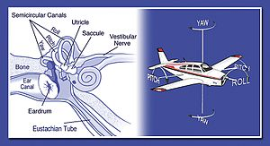Spatial disorientation - Inner ear with semicircular canals shown, likening them to the roll, pitch and yaw axis of an aircraft