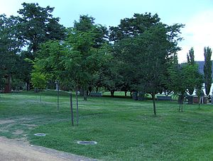 PEN International - Memorial grove, Canberra, Australian Capital Territory
