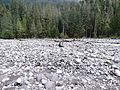 Jeff crossing Carbon River - Flickr - brewbooks (1).jpg