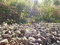 Jegrička, park prirode, Zmajevo 18.JPG