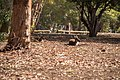 Journey 2 110520 gnangarra-108.jpg
