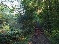 Junction of footpath and bridleway - geograph.org.uk - 579575.jpg
