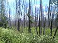 Kalininsky District, Tver Oblast, Russia - panoramio (28).jpg