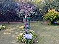Kalpavruksha Tree, Mughal Garden, Rashtrapathi Bhavan - panoramio.jpg