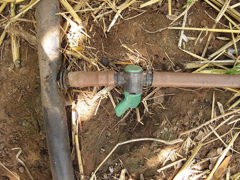 File:Kapková závlaha, napojení potrubí na rozvod vody s kohoutem.JPG