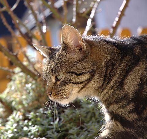 Katze groß 216.jpg