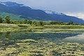 Kerkini wetland 1.jpg