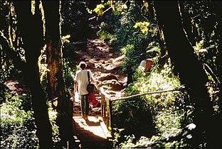 Kilimanjaro road to MandaraHut.jpg