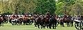 King's Troop Royal Horse Artillery (17186400839).jpg