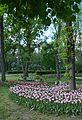 Kirovohrad Arboretum for WLE 2016 02 (YDS 4199).jpg