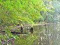 Koenigs Wusterhausen - Teich (Pond) - geo.hlipp.de - 43185.jpg