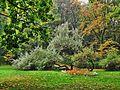 Kraków - park bednarskiego...jpg