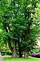 Kreis Pinneberg, Naturdenkmal 06-23 Uetersen 01.jpg