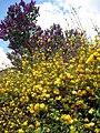 Květy v Obřanech.jpg