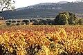 L'automne au Castellet - 01.jpg