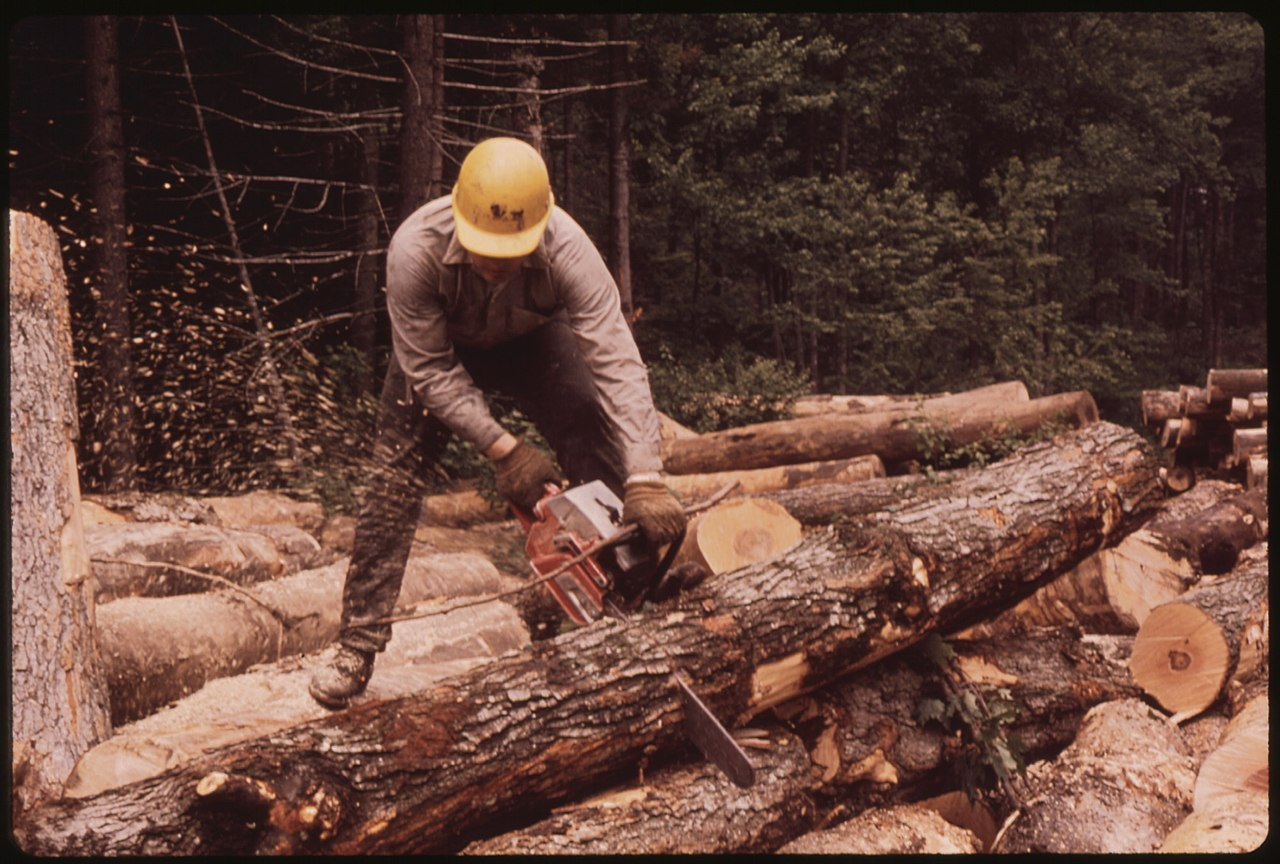 File:LUMBERJACK FROM TUPPER LAKE CUTTING LOGS INTO EIGHT FOOT