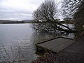 Landing stage and leaning tree, Talkin Tarn - geograph.org.uk - 1132335.jpg