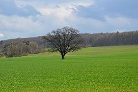 Landschaftsschutzgebiet Vorholzer Bergland - Wenser Berg - Blick von Norden (4).JPG