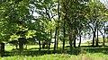 Langside Wood - geograph.org.uk - 1326252.jpg