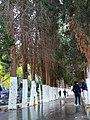 Languages Street in University of Jordan.jpg