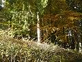 Le Pâquier-Montbarry (Le Pâquier (Fribourg)) (autumn) 8.JPG