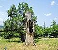 Le chêne mort.jpg