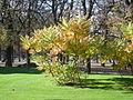 Les couleurs de l'automne s'installent au jardin du Luxembourg, Paris 2011.jpg