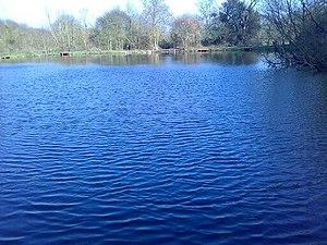 Dagnam Park - Lily Pond