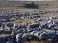 Limestone pavement, Sulber - geograph.org.uk - 40123.jpg