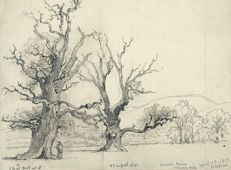 Henry Harris Lines - Drawing of Colwall Oaks