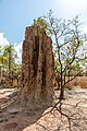 Litchfield National Park (AU), Magnetic Termite Mounds -- 2019 -- 3732.jpg