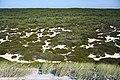 Litoral entre a Praia da Vieira e a Praia de Pedrógão - Portugal (9685579299).jpg