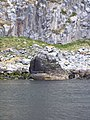 Little Ailsa - geograph.org.uk - 1375386.jpg